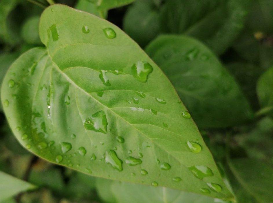 Яблучний Спас накриє Полтавщину сильним дощем